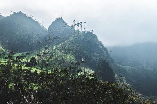 Yon-Evasion-colombie-8